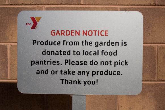 YMCA Garden Web-1828